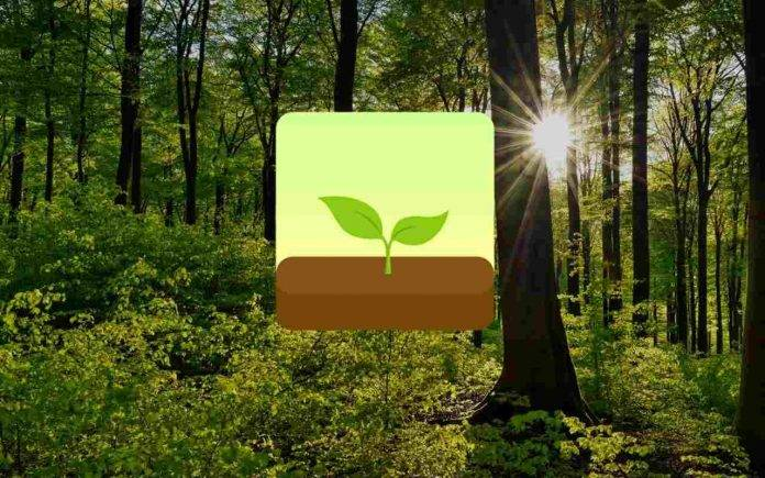 Terra Forest app